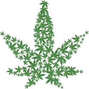 medical marijuna leaf