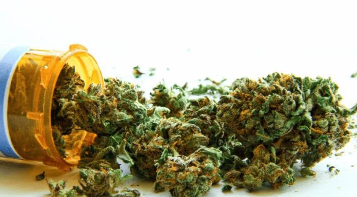 Cannabis Wins