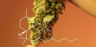marijuana 4/20 culture