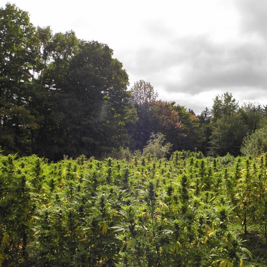 NJ HEMP FARM