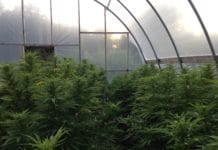 greenhouse decriminalization