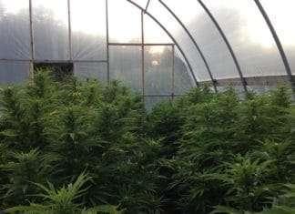 greenhouse decriminalization