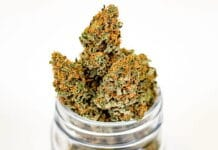Decriminalize cannabis