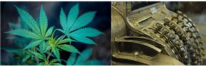 NJCTA, cannabis