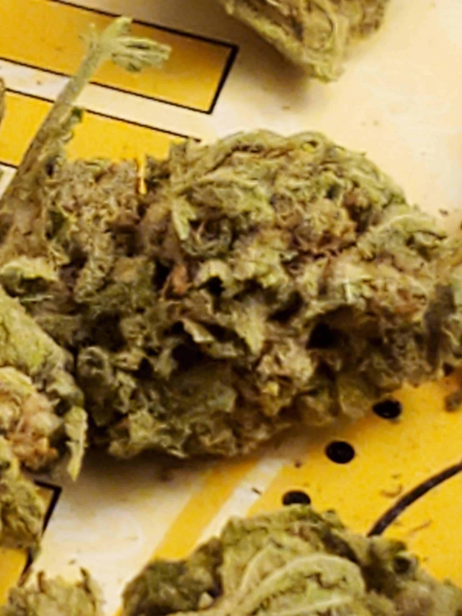 cannabis homegrow