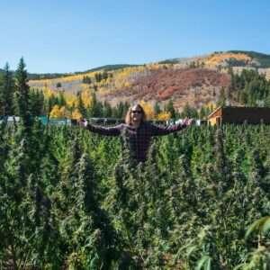 PufCreativ cannabis marketing