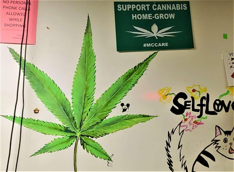 NJ Cannabis Homegrow