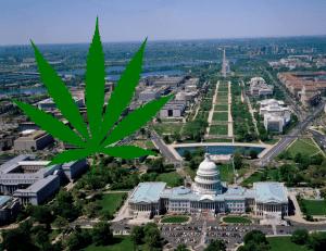 Pro-Cannabis Policies